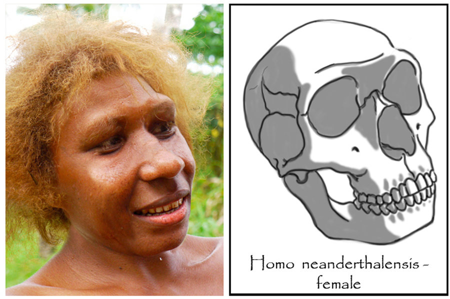 Click image for larger version  Name:	homo_neanderthalensis___female__gibraltar__by_babanovac0232-d5c0qte.jpg Views:	7 Size:	115.3 KB ID:	10040