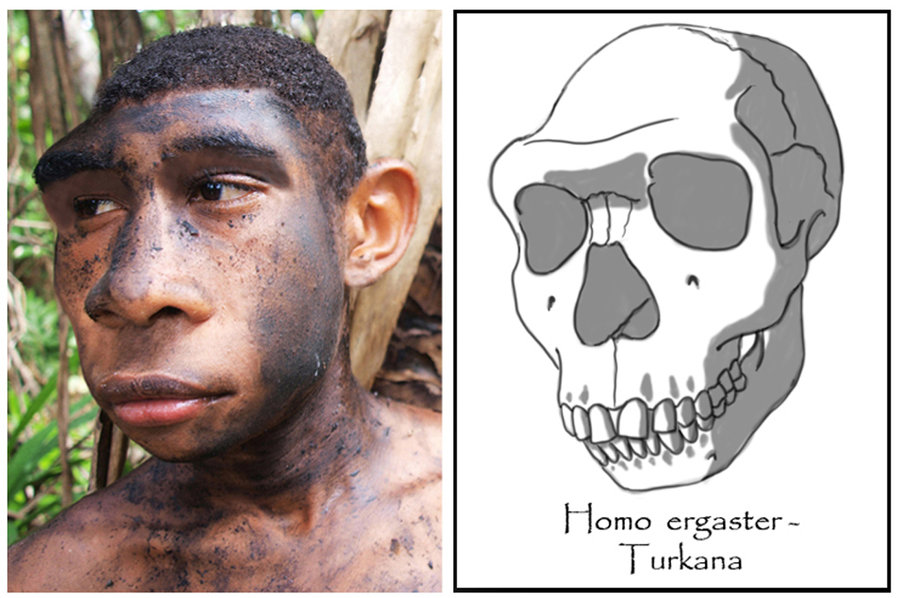 Click image for larger version  Name:	homo_ergaster___adolescent_male__turkana_boy__by_babanovac0232-d5c0o74.jpg Views:	13 Size:	117.2 KB ID:	10043